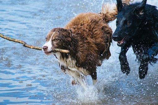 dogs-1246588__340